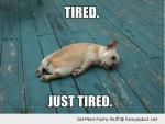funny-tired-dog-pics