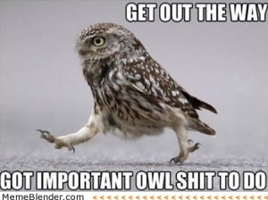 get-out-the-way-got-important-owl-shit-to-do