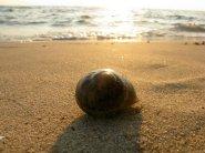 snail beach